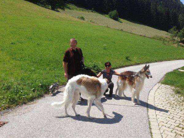 Almwiesen und Bergwald - wo sich Hase und Fuchs gute Nacht sagen.